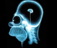 Ученые: Интернет меняет устройство человеческого мозга