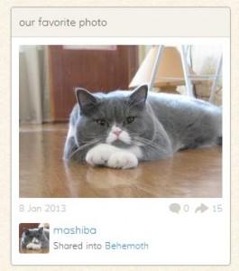Любители кошек получили собственную соцсеть